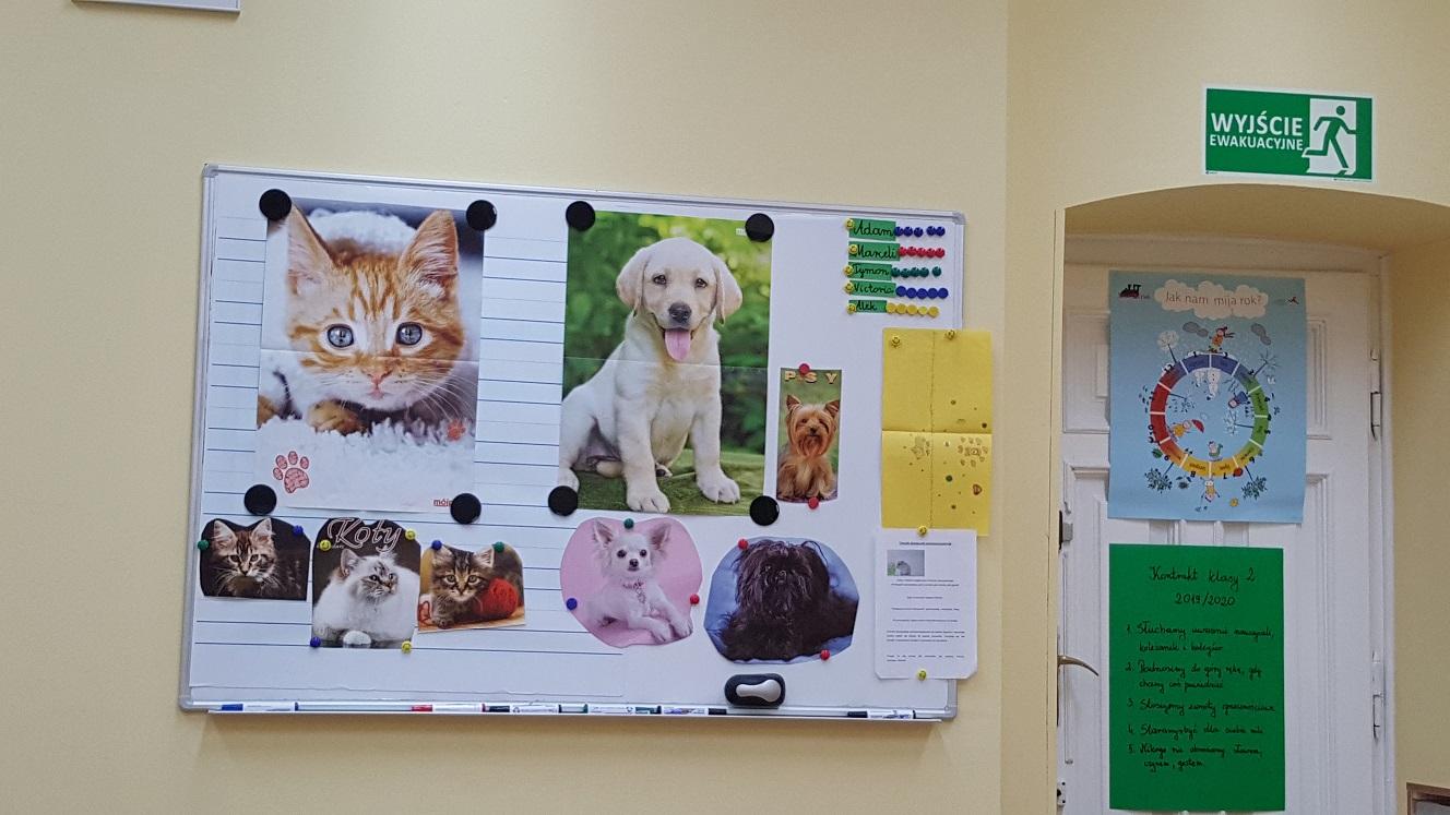 Światowy Dzień Zwierząt w naszej szkole